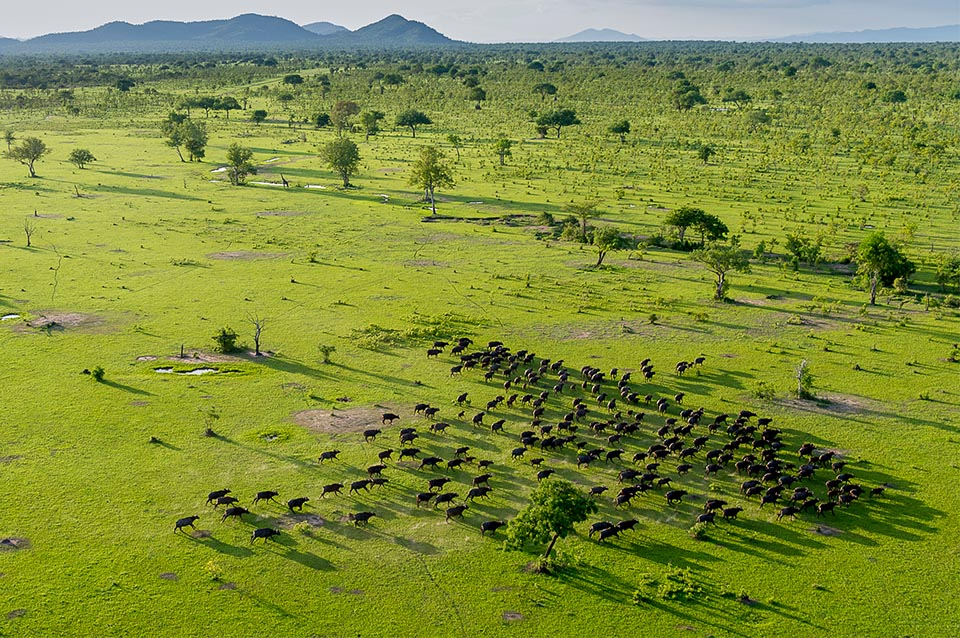 tanzania split selous game reserve and establish new national park