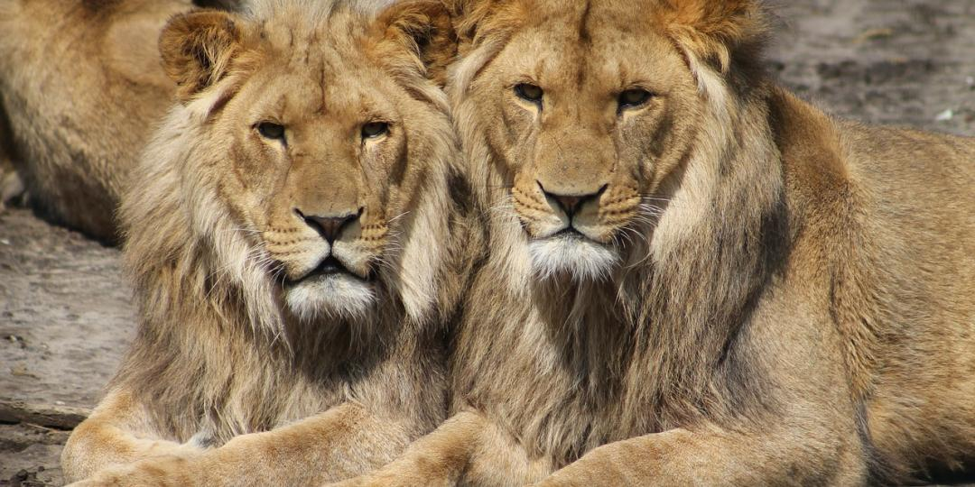 The perception of SA as a brand is taking a negative hit, thanks to predator breeding for trade, hunting and petting, says a report.
