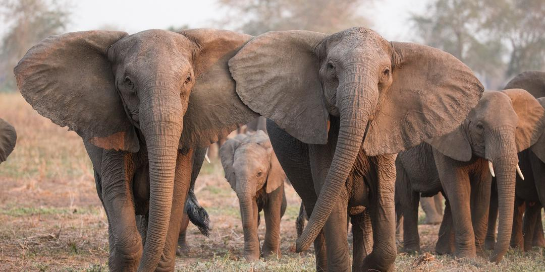 Photo tourism speaks out on the lifting of Botswana's proposed elephant hunting ban.