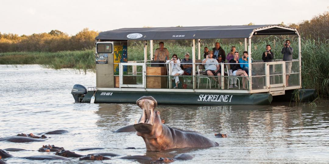 Shoreline hippo and croc tours