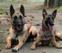 A canine unit will operate at Maputo Airport from September, to combat the illegal smuggling of wildlife products.