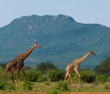Tsavo East National Park.