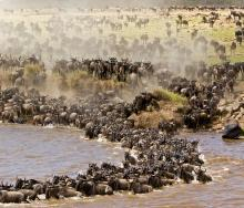 Kenya's Tourism and Wildlife Cabinet Secretary launches new tourism campaign, leveraging the country's naturally occurring wildebeest and whale migrations.