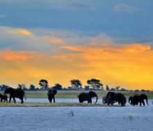 Botswana provides and experience that is worth every cent.