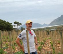 Gerhard van der Horst, managing director of Red Cliff Property who grew-up on Imhoff Farm in the recently planted vineyard overlooking Long Beach, Chapman's Peak and Hout Bay in the distance. The vineyard will start producing in 2022 and undoubtedly boasts one of the best views in the Cape Peninsula.
