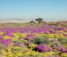 Gondwana Sperrgebiet Rand Park