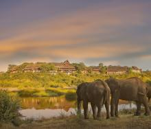 Elephants in front of Victoria Falls Safari Lodge.